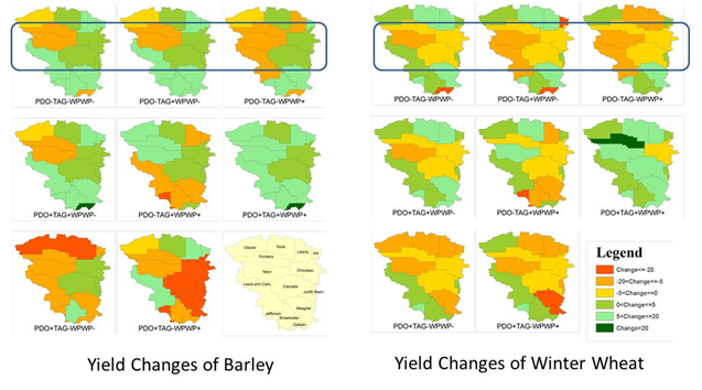 Figure 2: Percent change in county-level barley and winter wheat yield in each DCV phase combination compared to long-term average yield in the Marias sub-basin.